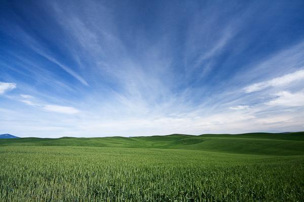 Creative Writing:  Theme:  Green Wheat Fields