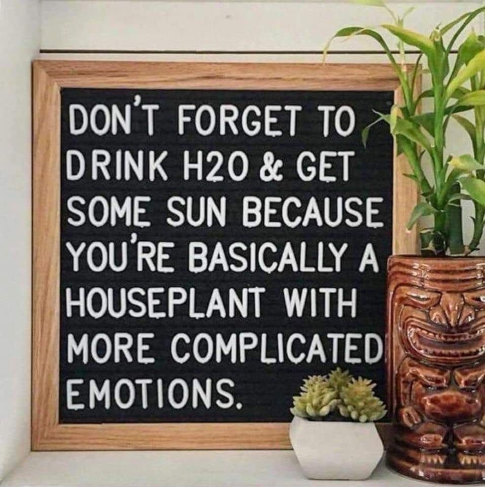 houseplant-with-complicated-emotions